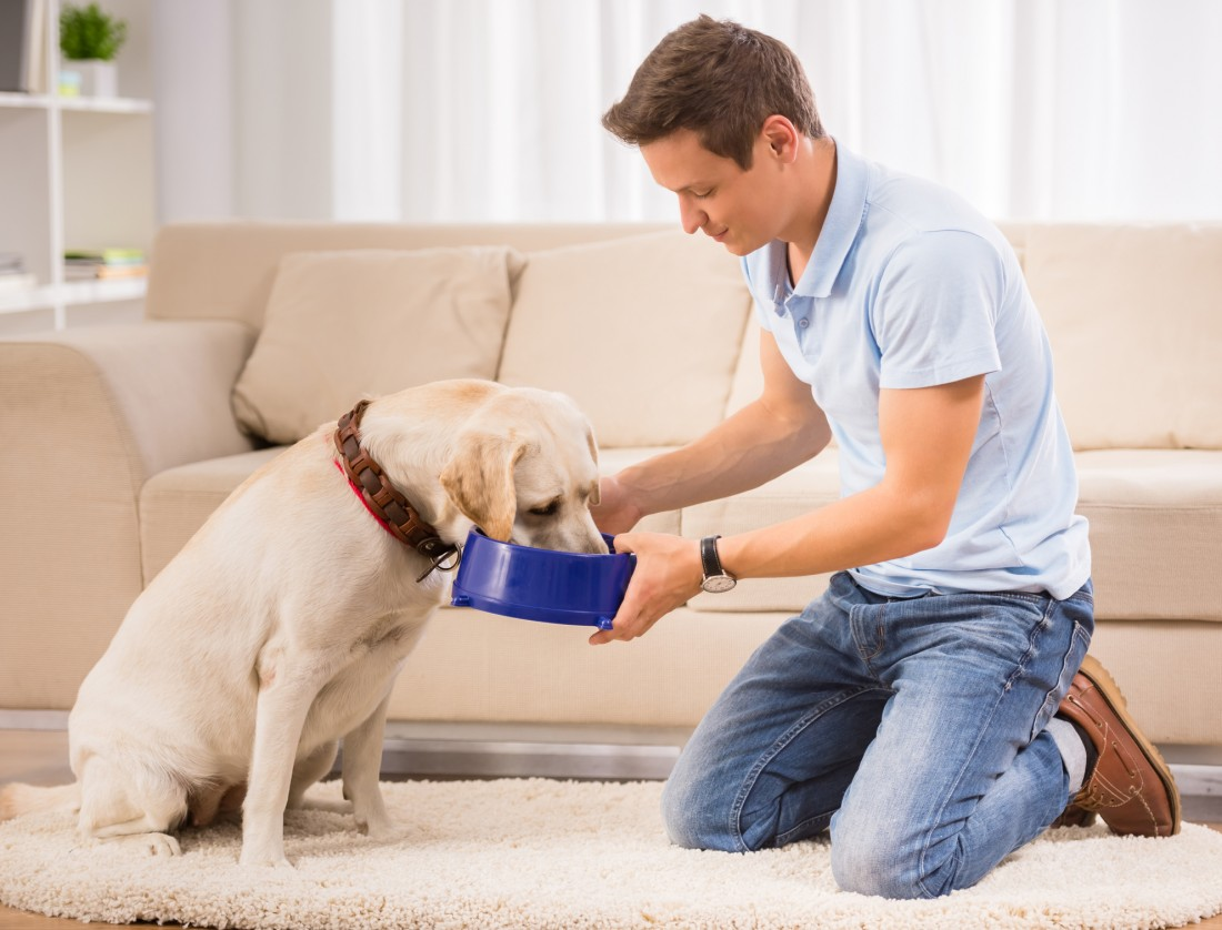 Best Dog Food For Mature Dogs