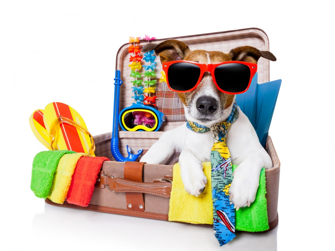 Traveling With Your Pets - AMAC - The Association of ...